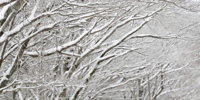 Студена временска прогноза