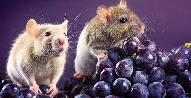 (ГАЛЕРИЈА) Убавата страна на стаорците