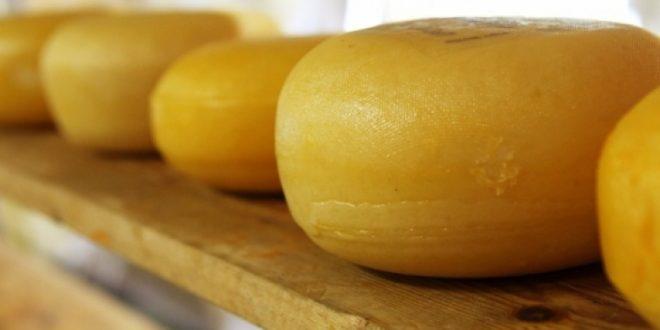 Корејски научници  Швајцарско сирење го продолжува животот