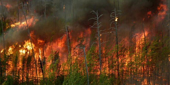 Локализиран пожарот над Македонска Каменица