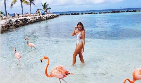 Влезот на плажа на Аруба чини 100 евра, но фламингата ви јадат од рака