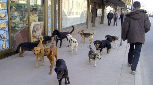 Кучињата скитници напаѓаат  како до систем за превенција и отштета