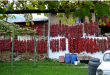 """Со камп-приколки од Австрија и Германија по """"буковец"""" во Македонија"""