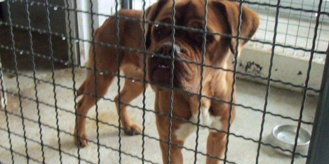 ЈП Комунална хигиена-Скопје демантира дека заловува бездомни кучиња
