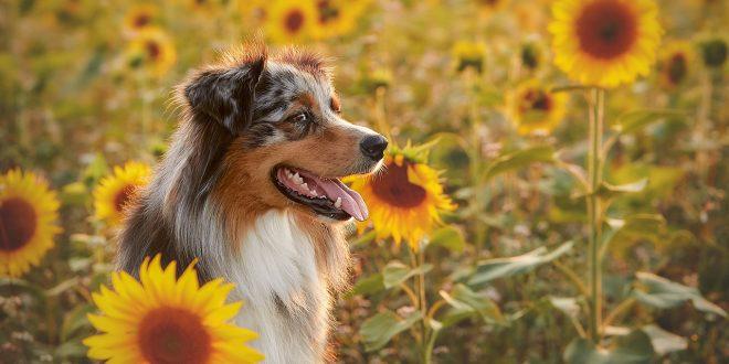 Пати ли вашиот миленик од желудечни проблеми? Испробајте го ова решение