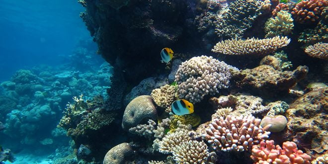 Климатските промени би можеле да доведат до исчезнување на коралните гребени