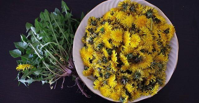 Чудотворното и лековито глуварче, билка која штити од многу заболувања