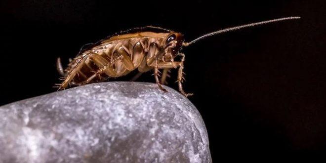 Со помош на овие трикови ослободете се од досадните инсекти и други домашни штетници