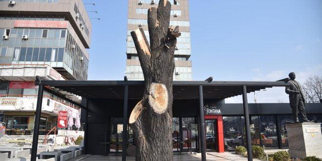 """Без дозвола, исечено здраво дрво кај """"Мавровка"""" (фото)"""