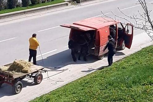 Во Скопје: Го удираа со стап коњот за да влезе во комбе (видео)