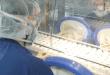 """Пропаст на """"имунитетот на стадото"""": Знаеме колку траат корона антителата"""