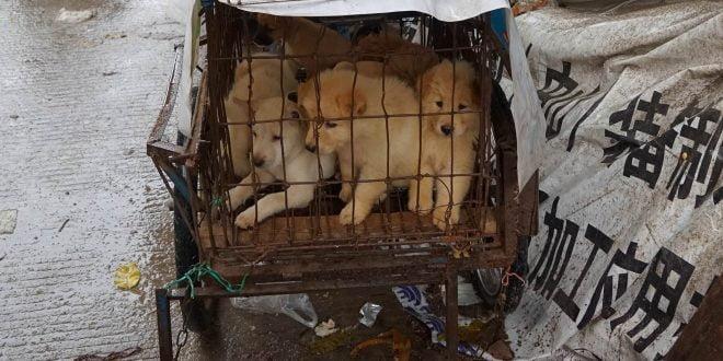 Во Шенжен забранија јадење на мачки и кучиња