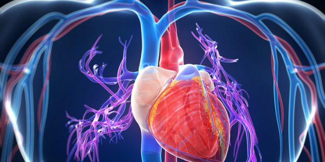 Научниците објаснуваат како коронавирусот влијае врз вашето срце