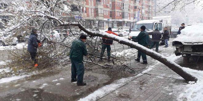 Во Скопје 22 паднати дрвја поради обилните врнежи од снег