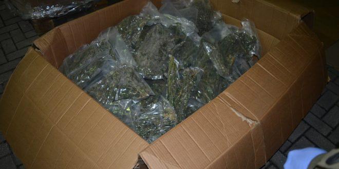 Три лица осомничени за производство на марихуана во викенд-куќа во Визбегово