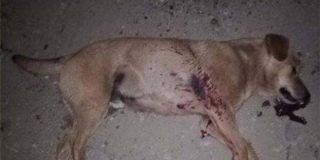 Анима Мунди: Да се сместат зад решетки монструмите кои од возило застрелале и убиле куче!