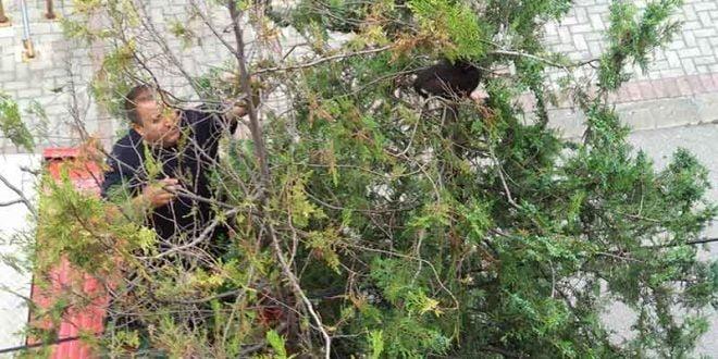 Пожарникари спасуваат маче во Скопје (ВИДЕО)