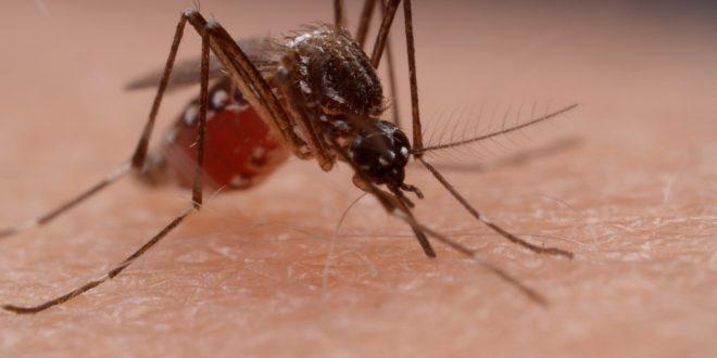 """Некоја крв е """"послатка"""" од другите: Ако ја имате оваа крвна група, вие сте жив мамец за комарци"""