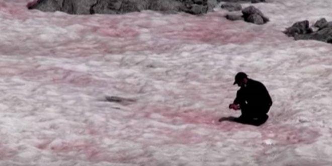 Научници: Глечерот во Италија доби розева боја, а тоа не е добра вест